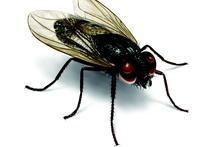 Flies Treatment Service Philadelphia