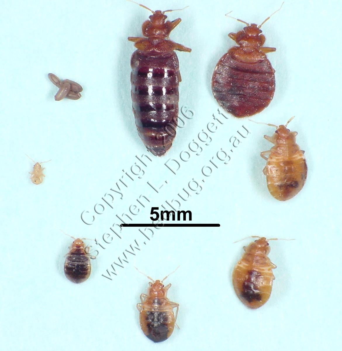 Bed Bugs Control PA